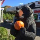Bear Pumpkin