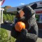 Bear Pumpkin