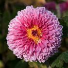 Obit flower