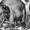 GOP Elephant wide
