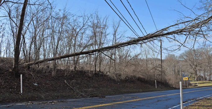 A downed tree on a wire (photo from Eversource)