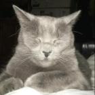 Daisy Lost Cat Stamford 6-2-16