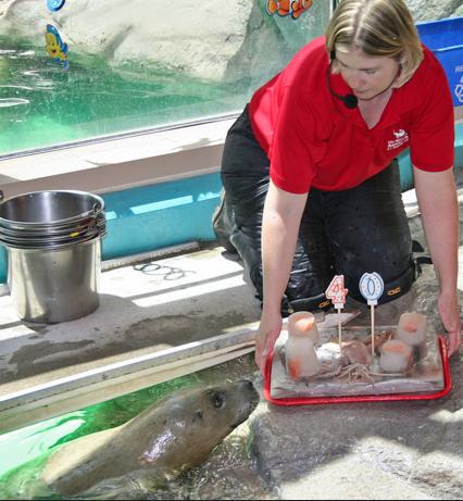 Susie birthday Maritime Aquarium harbor seal 6-4-16