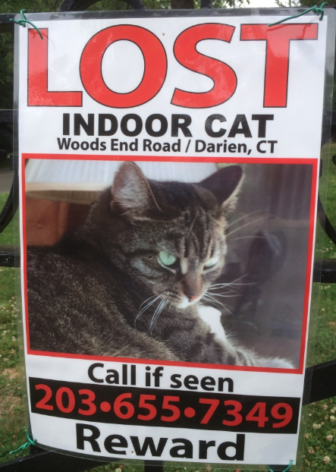 Poster seen at Cherry Lawn Park for a cat lost on Woods End Road.