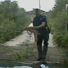 Stuart Schwengerer fawn deer 8-12-16