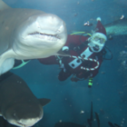 Santa Dives with Sharks 2 911-22-16
