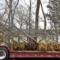 Tree Conservancy gift 1 912-23-16
