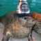 Seal New Year's Eve Maritime Aquarium 912-30-16