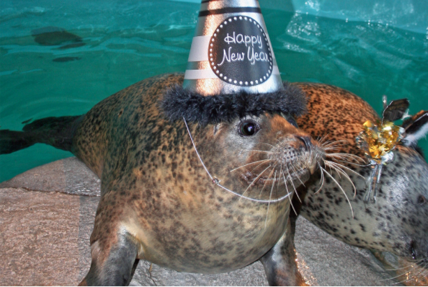 Seal New Year's Eve Maritime Aquarium 912-30-16