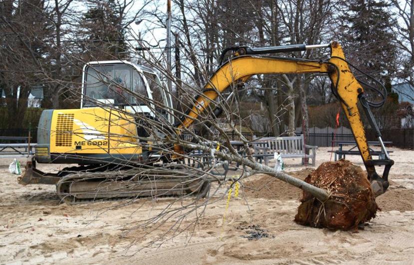 Tree Conservancy 1 01-23-17