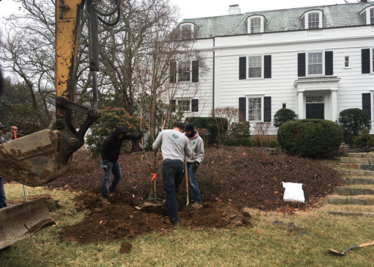 Tree Conservancy DCA tree planting 01-27-17