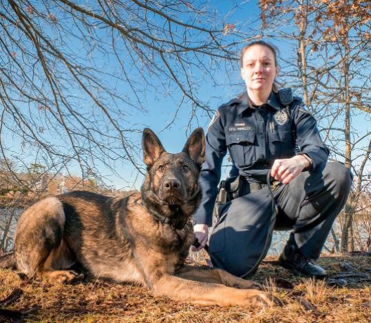 Amanda Hinkley Argo German Shepherd Darien Police 02-02-17