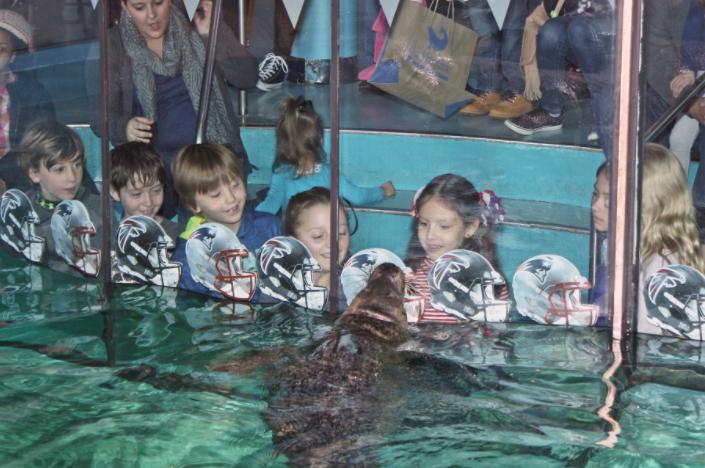 Maritime Aquarium seal picks Superbowl 02-04017