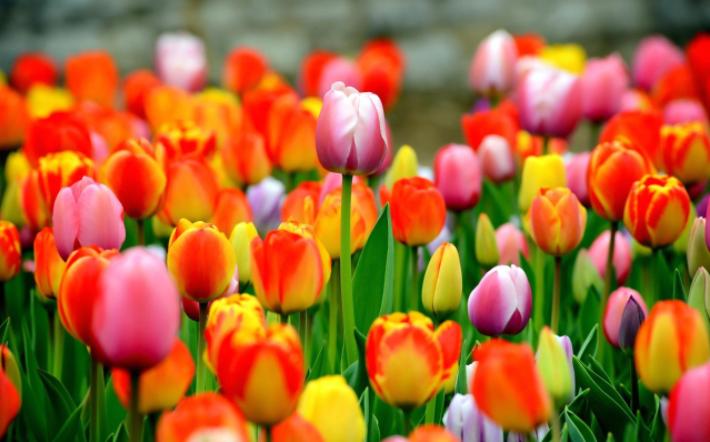 Tulips DCA flower arranging class 03-06-17