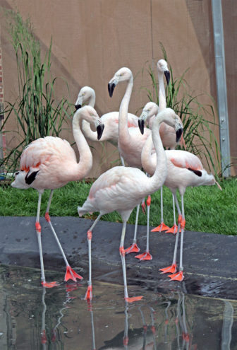 Flamingo B 05-17