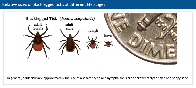 Tick sizes Lyme disease CDC https://www.cdc.gov/lyme/transmission/index.html