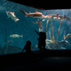 Maritime Aquarium fish tank 06-14-17