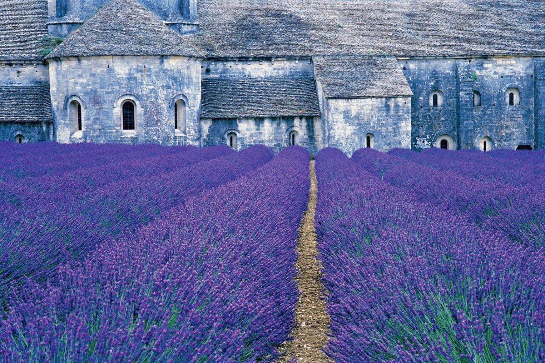 SoNo Arts Festival 2017 purple lavendar
