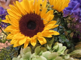 Flowers Sunflower Darien Community Association 09-07-17