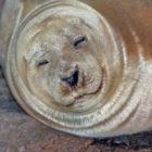 Maritime Aquarium Seal 09-04-17