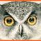 Darien Nature Center Halloween Hoot n Howl 2017 10-24-17