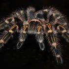 Spider Darien Library 10-13-17