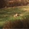 Bobcat New Canaan Decembr 2015 11-29-17