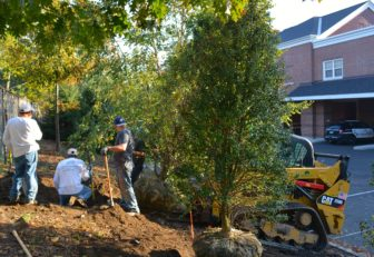 Tree Conservancy at Darien PD