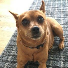 Lost Dog Rachel Nusslein family
