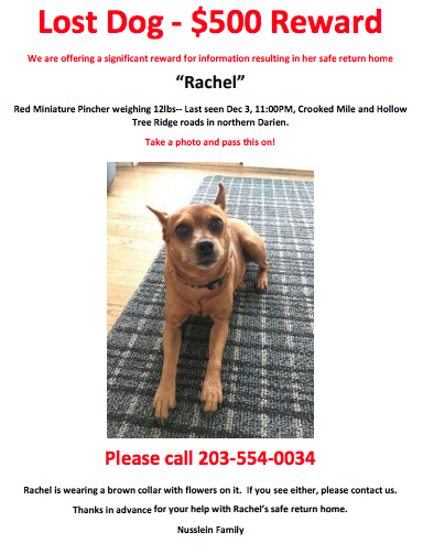Wanted poster for lost dog rachel nusslein family 12-15-17