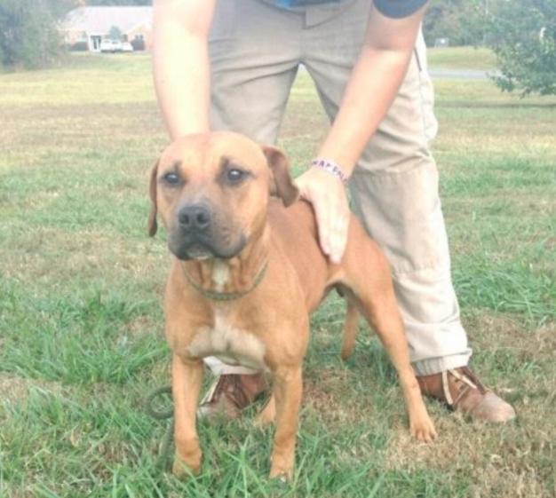 Coco adoptable dog GFP 18-01-01