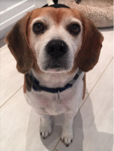Kangas Benny dog adopted 12-01-05