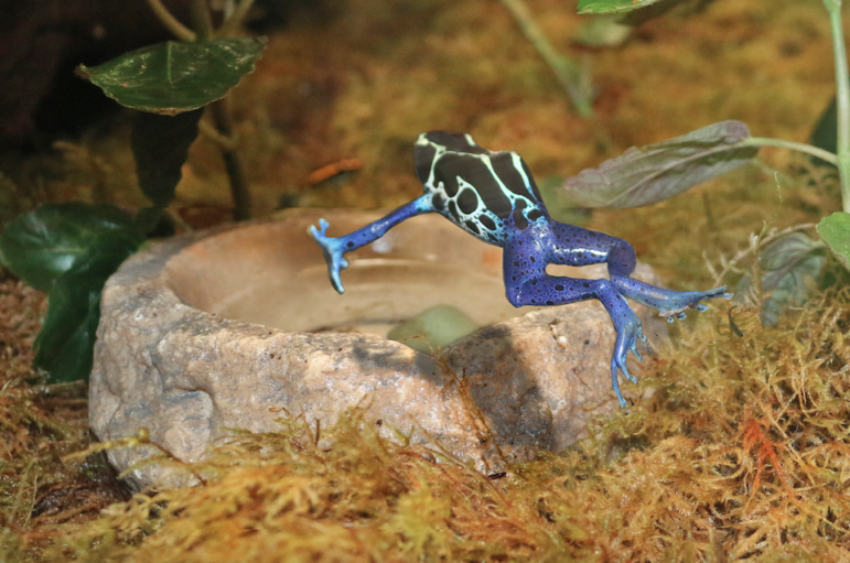 Frog Maritime Aquarium 2018