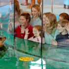 Seal of Approval Maritime Aquarium