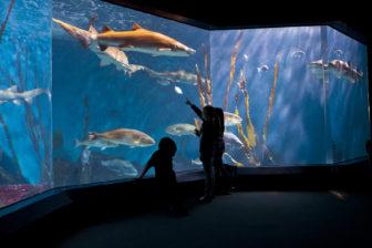 Shark Tank Maritime Aquarium
