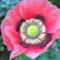 Flower Diane Farrell