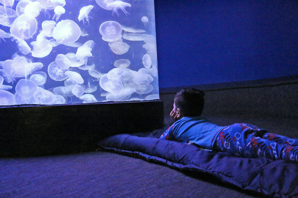 Maritime Aquarium Sleepover Family 2018
