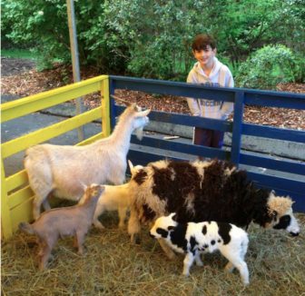 Down on the Farm Darien Nature Center animals