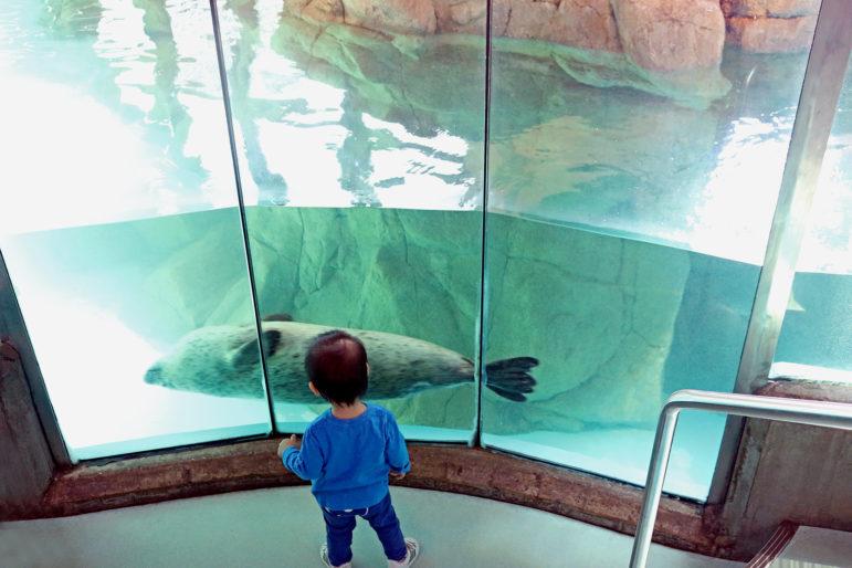 Maritime Aquarium kid seal