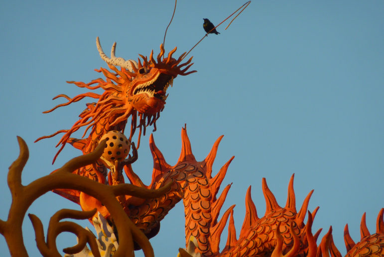 Dragon and Bird Borneo photo by Steve Watson Class of 73