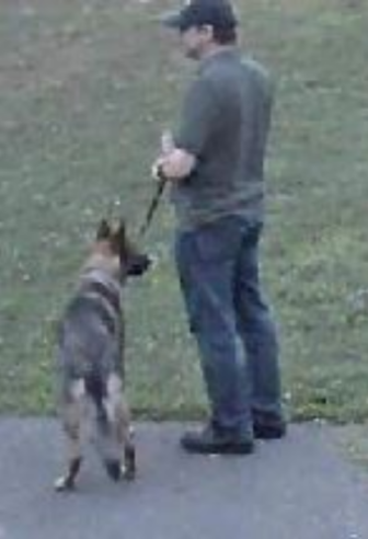 man and dog suspected in New Canaan attack on dog