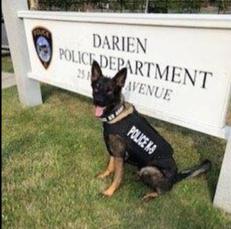 K-9 Argo Police Dog Darien Police vest