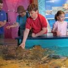 Feeding Time Behind the Scenes Maritime Aquarium 2018