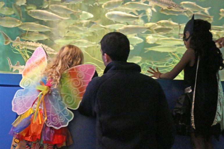 Maritime Aquarium AquaScarium halloween