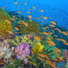 Reef picture for Oceans: Our Blue Planet IMAX at Maritime Aquarium