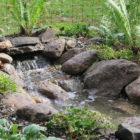 Pondless Waterfall DCA Bird Sanctuary