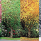 The Four Seasons image from Stamford Symphony website