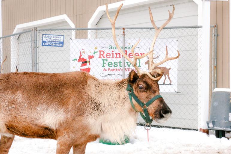 Greenwich Reindeer Fesatival 2018 one