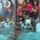 Harbor Seal Aquarium Superbowl Pick 2019