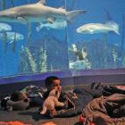 Family Sleepover Maritime Aquarium